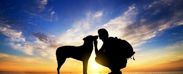 El amanecer con tu perro