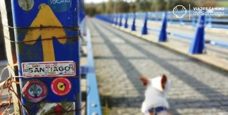 Señales y perros en el camino