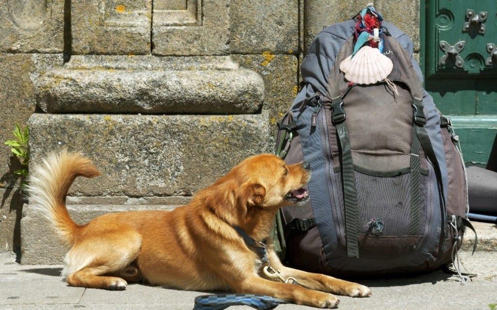 Camino con perros