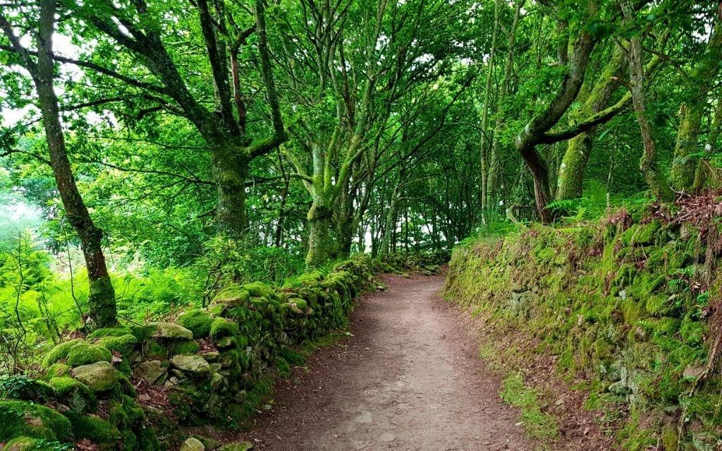 Ruta bosque camino