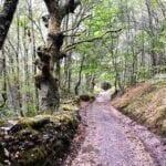 El Camino Aragonés • Historia e itinerario