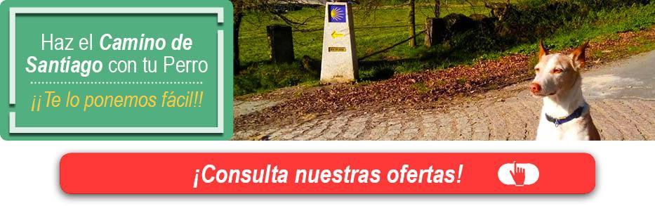 Haz el Camino de Santiago con tu Perro