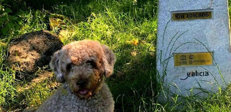 El camino con perro