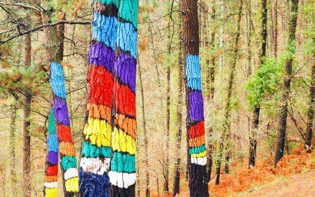 Portada Bosque de Oma