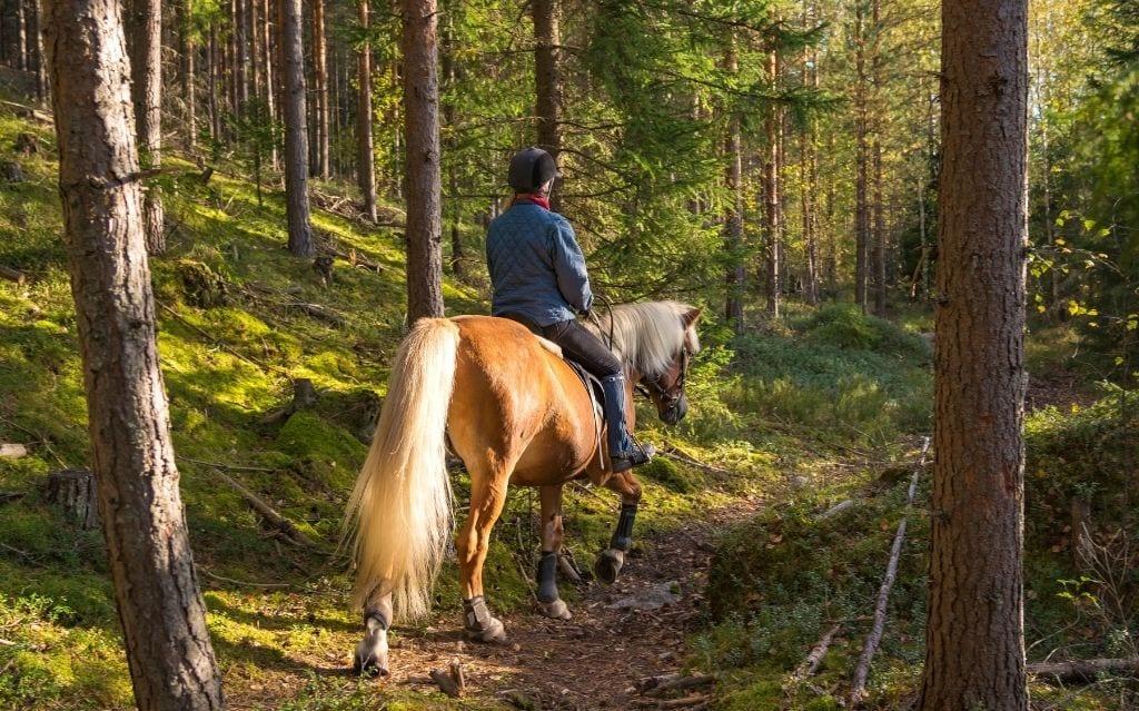 Camino de Santiago by horse