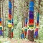 Visita el Bosque de Oma en Vizcaya